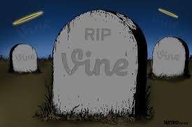 vine7